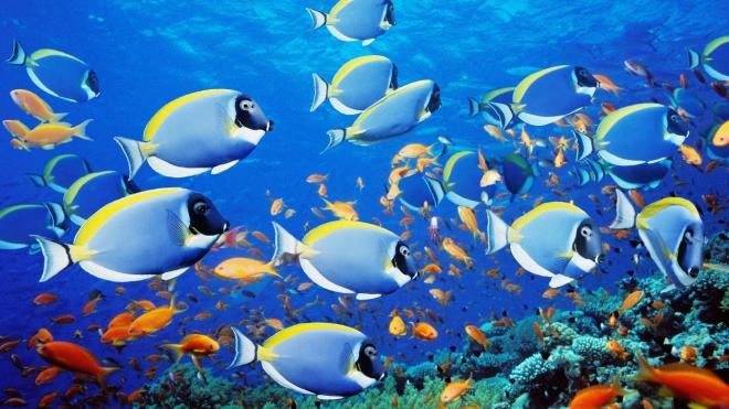6969408-sea-fish-wallpaper-20133