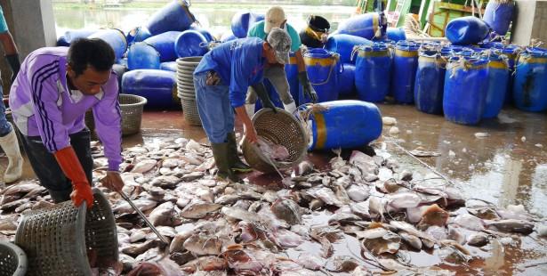 thailand_burmese-migrant-dockworkers18_jeanne-hallacy_2014-615x310