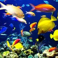 8 raisons pour lesquelles manger du poisson est plus grave que vous ne le pensez :
